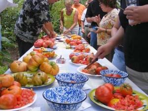 Heirloom tomato tasting fredericksburg southern exposure seed exchange organic