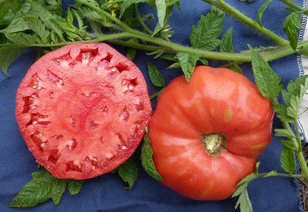 Radiator-Charlie's-Mortgage-Lifter-tomato-SESE-web