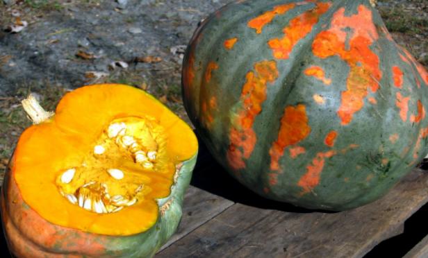 Pumpkin & Squash Recipes Perfect for Fall