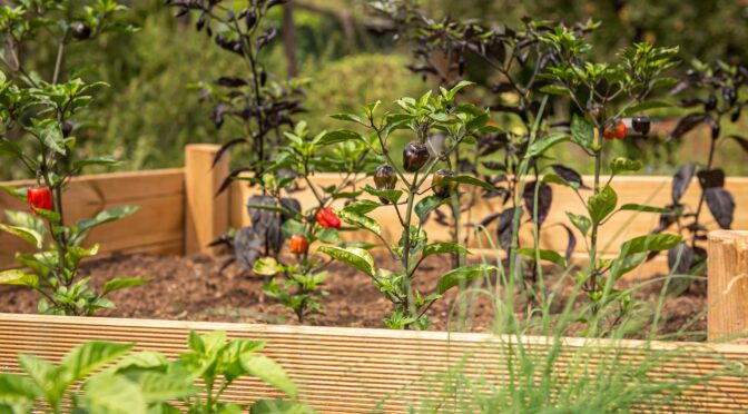 Pros & Cons of Raised Beds