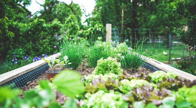 13 Things I Wish Someone Told Me When I Started Gardening