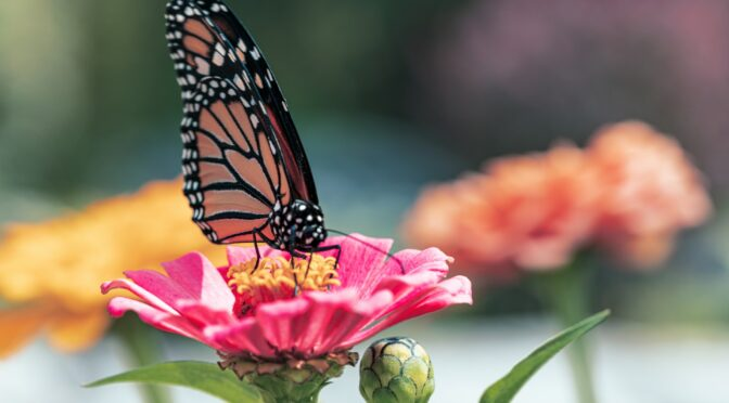 10 Plants to Attract Beneficial Insects to Your Garden