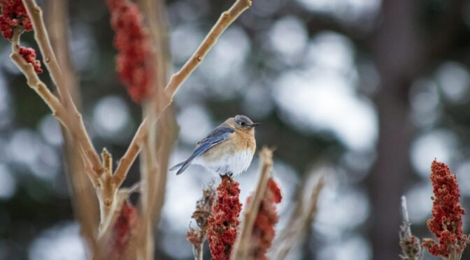 5 Birds Native to the Eastern U.S. To Attract to Your Garden
