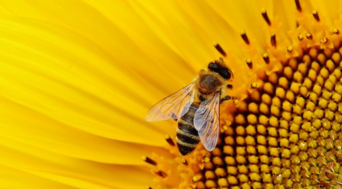 A Beginners Guide to Pollination