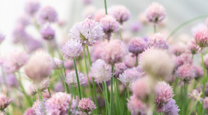 6 Tips to Maximize small garden productivity