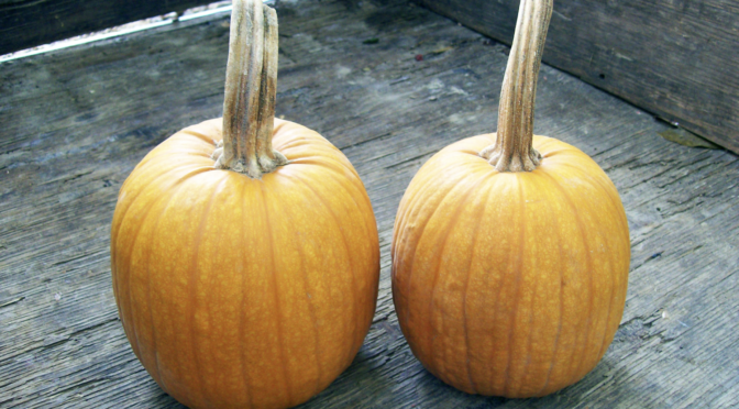 6 Easy Steps to Saving Pumpkin Seeds